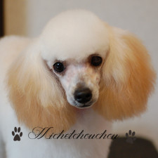 Dog grooming Yokosuka