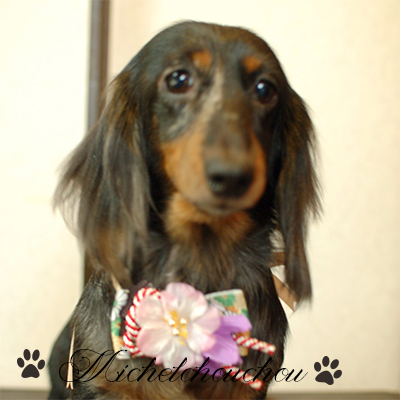 Yokosuka Dog Grooming Salon